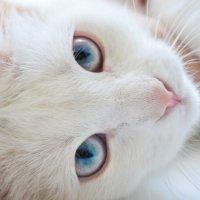 Кошачий взгляд :: Julia Tyagunova