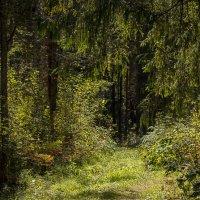 Тропы лесные :: Alhna ---