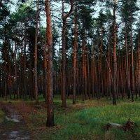 в чащу леса :: Юрий Котов