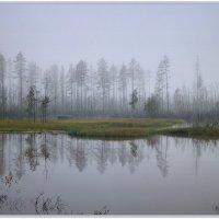 Туманным утром :: Vadim WadimS67
