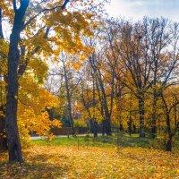 Осень в пригороде 4 :: Виталий