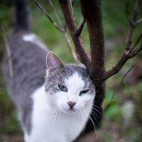 Котик :: Астарта Драгнил