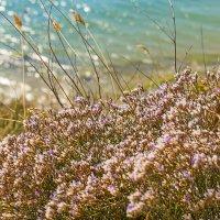 Цветы и море :: Елена Васильева