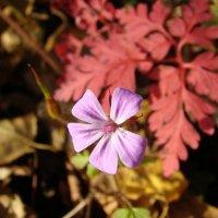 Аленький цветочек :: Елена Якушина