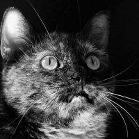 Удивлённая кошка :: Avada Kedavra!
