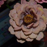 Цветок. :: zoja