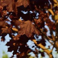 А осень-то, осень! Красивая :: Александр Сидоров