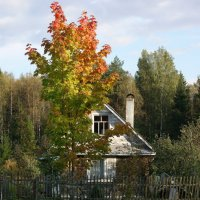 Поцелуй осени :: Виктор Никитенко