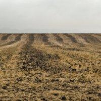Полосатые чернозёмы... :: Ирина Шарапова