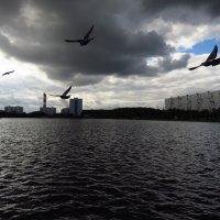 Рожденные летать летают :: Андрей Лукьянов