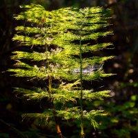 Сумрачный лес. :: Vladimir Lazarev
