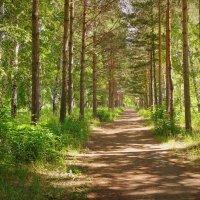 Мохнатый лес манит в свои владенья,где от жары спасет благая тень... :: Елена Ярова