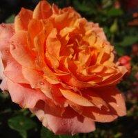 Яркий праздник солнца :: Елена Ярова