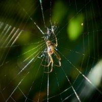 Паучок и паутинка :: НикЛеод