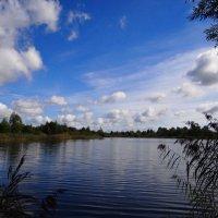 Озеро.. :: Антонина Гугаева