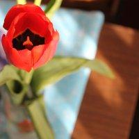Тюльпан :: Julia Tyagunova