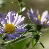 Просто цветы :: Юрий Кольцов