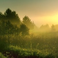 Утро туманное :: Владимир Миронов