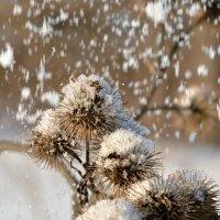 снежок :: Юрий Ефимов