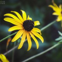Контрастные цветы :: Маргарита Б.