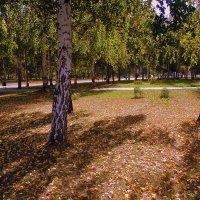 В парке ЛЫЖНЫЕ ТРЕНИРОВКИ. :: Мила Бовкун