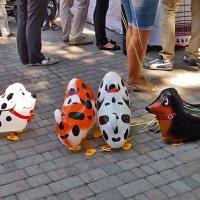 Воздушные собачки! :: Наталья