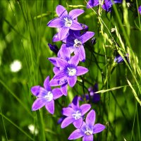 Луговые цветы :: Vladimir