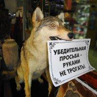Волчья вежливость :: Вячеслав Платонов