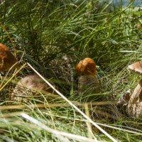 Эх, грибочки, мои грибочки :: leo yagonen