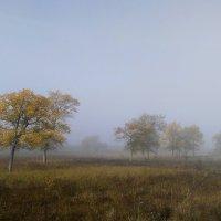 Утро туманное. Сентябрь... :: Евгения Каравашкина