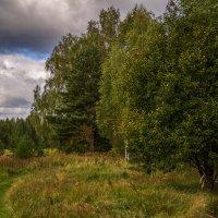 Вот и осень :: Андрей Дворников