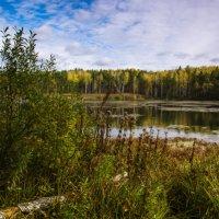 "Из серии ""Лесное озеро"" :: Борис"