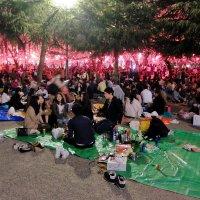 Пикники во время цветения сакуры :: Swetlana V