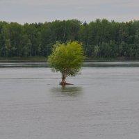 Одинокое дерево :: Алексей http://fotokto.ru/id148151Морозов