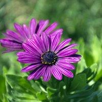 Осенние цветы 2 :: Gudret Aghayev