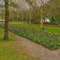 Кёкенхоф, Нидерланды :: Zinaida Belaniuk