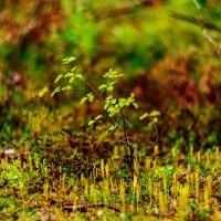 волшебный лес :: Ирэн