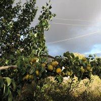 Перед грозой. :: bemam *