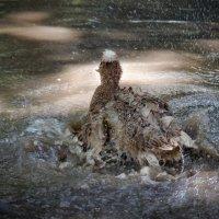 Море волнуется раз... :: Лидия Цапко