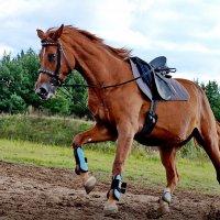 Лошади мчались,скакали,неслись.... :: Тамара Бучарская