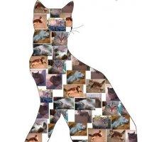 Кошки :: Елена *