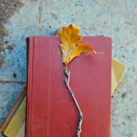 Книги для чтения на природе :: Света Кондрашова