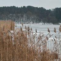 Тростник и зима. :: Андрий Майковский