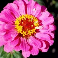 Цветы :: Кристина Виноградова