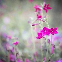Цветочки :: Инна Голубицкая