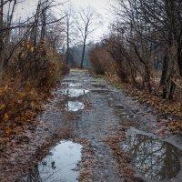 Мокрая осень :: Виталий