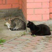 Два кота :: Andrew
