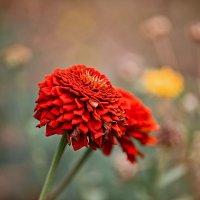 Красный цветок :: Татьяна Губина