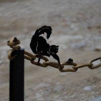 Кот который гуляет сам по себе... :: Александр Светлый