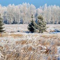 Морозное утро нового дня :: Екатерина Торганская